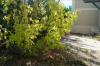 BAISSE DE PRIX ! Appartement avec jardinet !