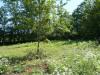 Terrain constructible, 1435 m² - Puy l Eveque (46700)