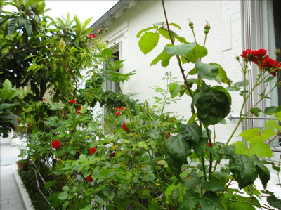 Maison colombes - 4 pièce (s) - 89 m²