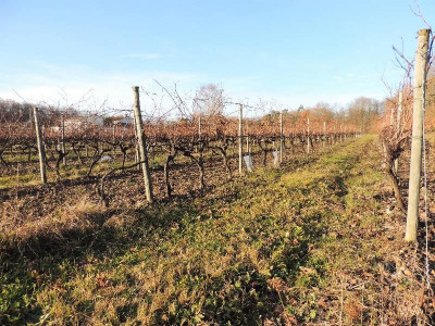 Terreno  Limitrophe de Cognac