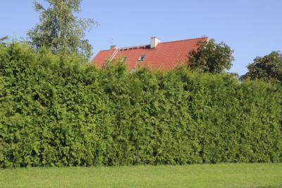 Terrain 300 m² Orgeval (78630)