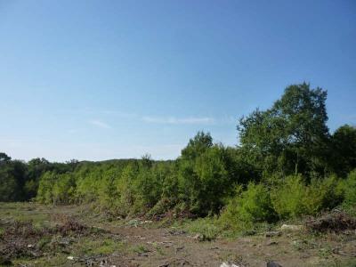 Parcelle de bois Gavaudun