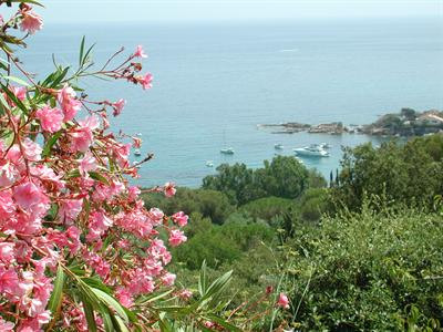 Vacation rental house / villa Les issambres 1910€ - Picture 10