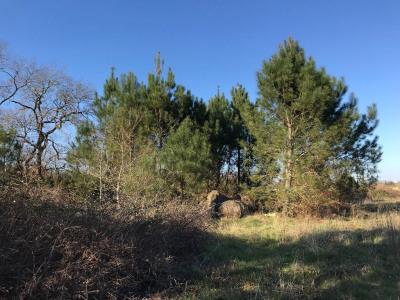 Terrain constructible sur la commune de Mees -102