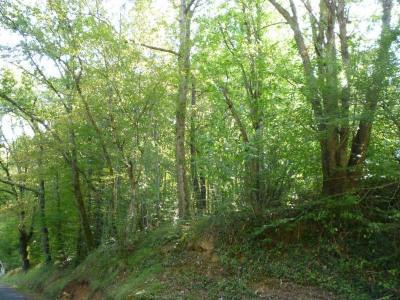 Parcelle de bois, 5980 m² - Cuzorn (47500)