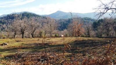 Terrain plat 3200 m² possibilité 2 maisons à Evisa
