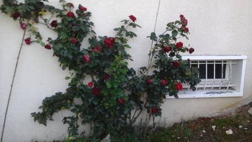 Vente maison / villa 6 minutes st germain du plain 210000€ - Photo 27
