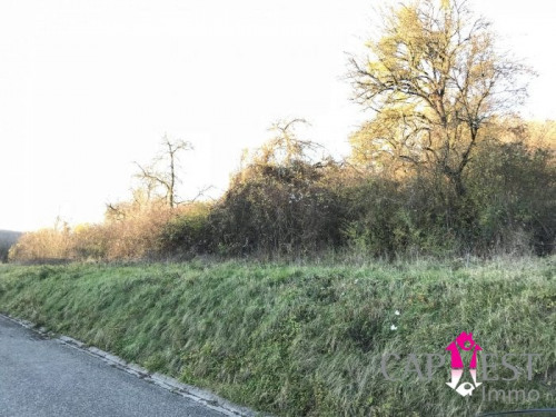 Vente - Terrain - 3185 m2 - Sarreguemines - Photo