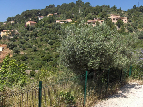 Vente - Terrain - 6250 m2 - Toulon - Photo