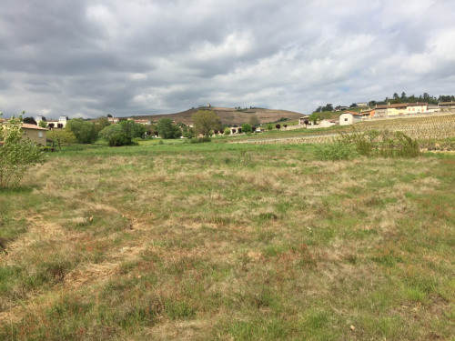 Sale - Site - 1158 m2 - Fleurie - Photo