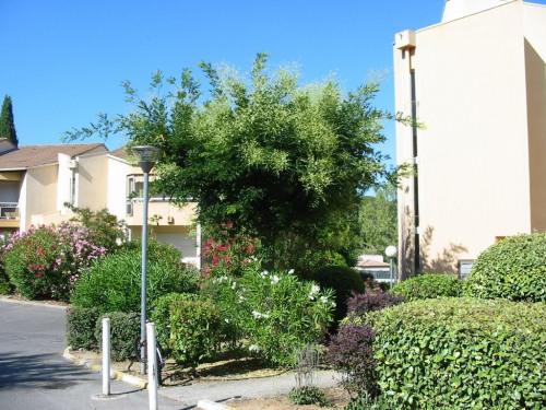 Vente - Studio - 30 m2 - Montpellier - Photo