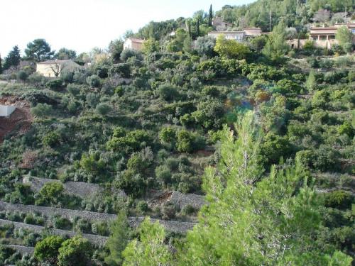 Revenda - Terreno - 6250 m2 - Toulon - Photo