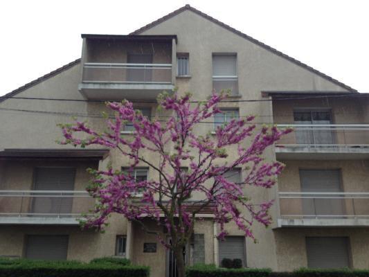 Rental apartment Livry-gargan 595€ CC - Picture 1