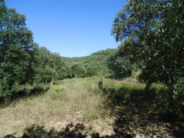 Vente terrain Reynes 120000€ - Photo 1