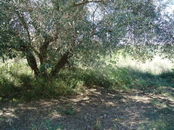 Vente terrain Reynes 120000€ - Photo 7
