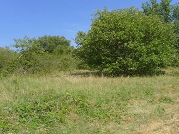 Vente terrain Le chatelet en brie 67200€ - Photo 1