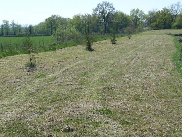 Verkoop  stukken grond Sury-le-comtal 39000€ - Foto 5
