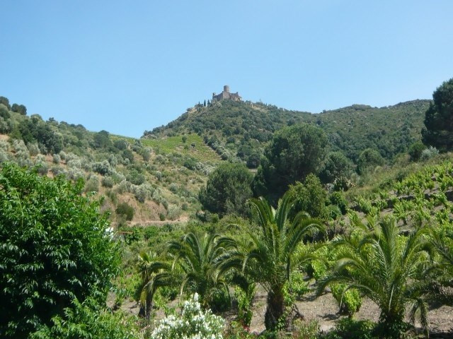 Vacation rental apartment Collioure 469€ - Picture 1