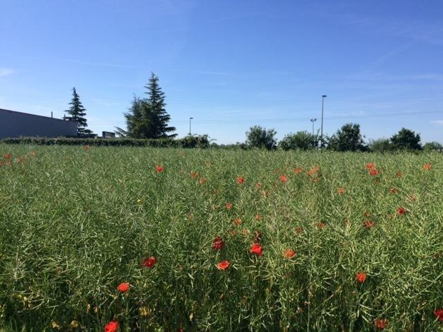 Vente terrain Villette d anthon 175000€ - Photo 2