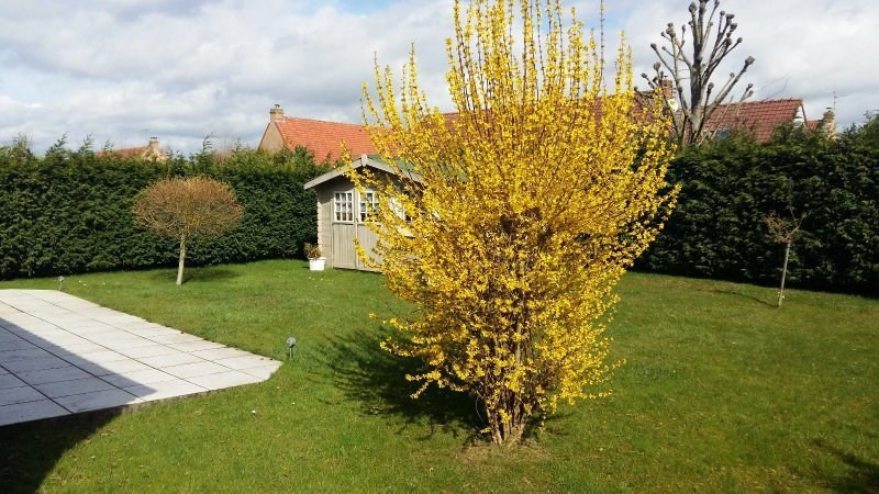 Vente maison / villa Longuenesse 236250€ - Photo 7