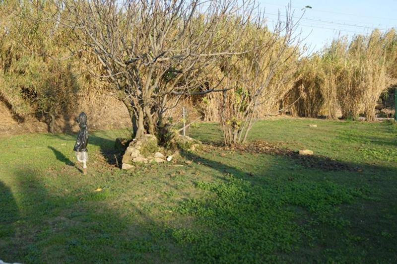 Vente terrain Piolenc 91000€ - Photo 4