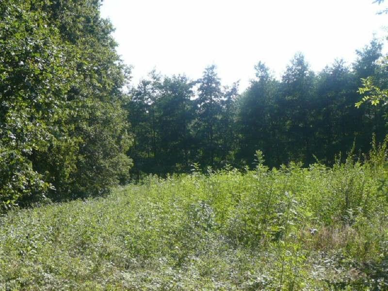 Vente terrain Sury es bois 15000€ - Photo 1