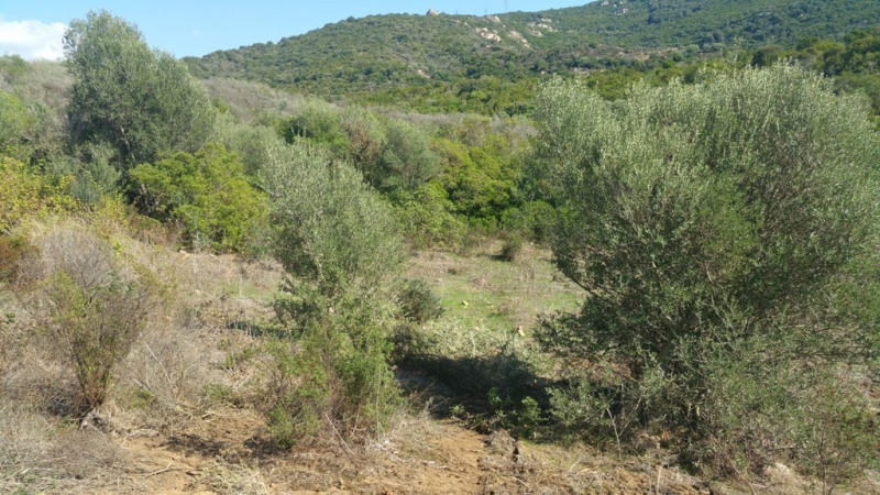 Vente terrain Pietrosella 136 250€ - Photo 5