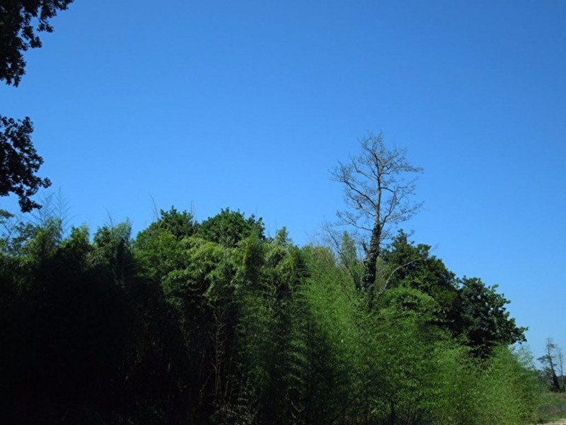 Vente terrain Angresse 125000€ - Photo 4