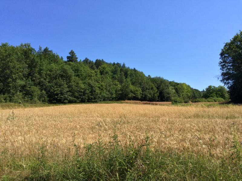 Vente terrain Saint-germain-de-belvès 97200€ - Photo 3