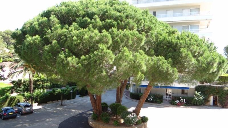Location vacances appartement Cavalaire 800€ - Photo 3