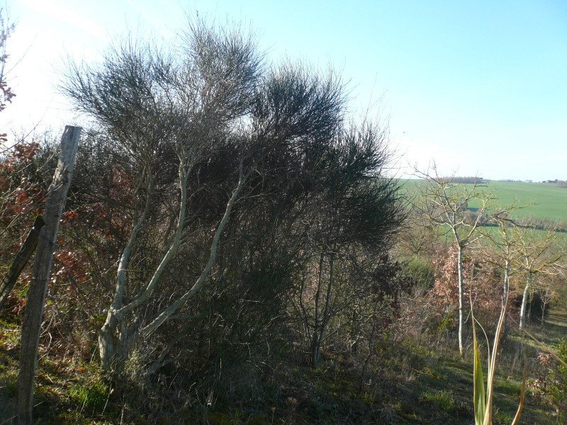 Vente terrain L'isle jourdain sud ouest 10 min 80 257€ - Photo 4