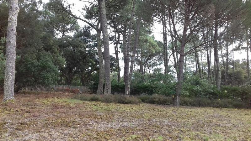Terrain Moliets-et-Maa