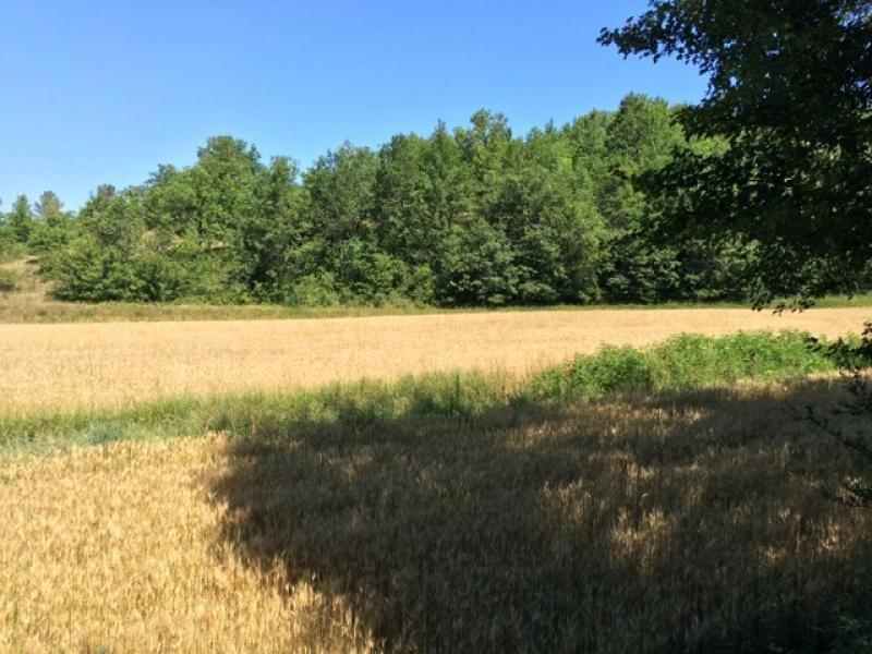 Vente terrain Saint-germain-de-belvès 68300€ - Photo 11