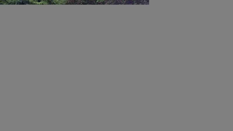 Vente terrain La plaine des palmistes 55000€ - Photo 3