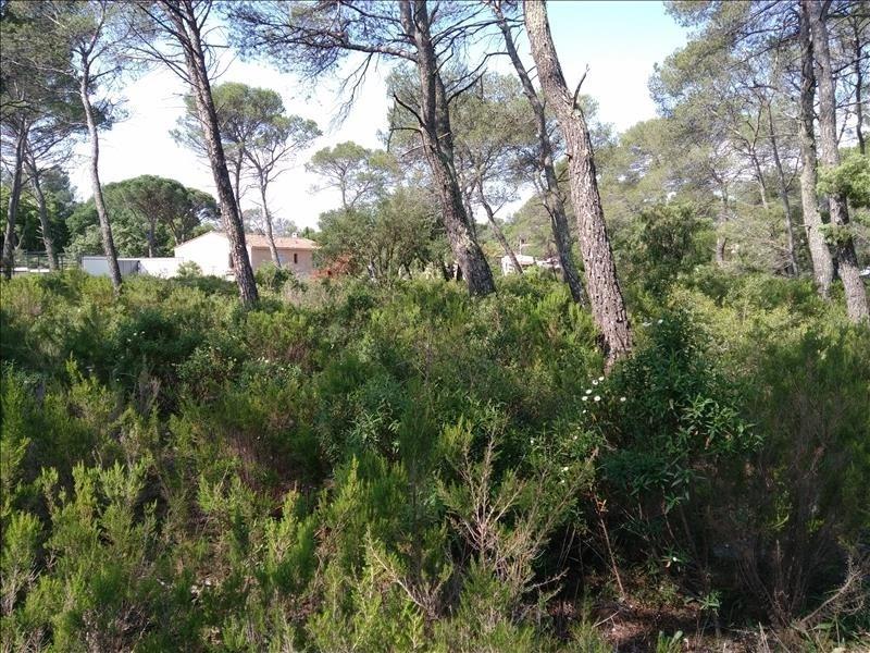 Sale house / villa Le cannet des maures 366000€ - Picture 3