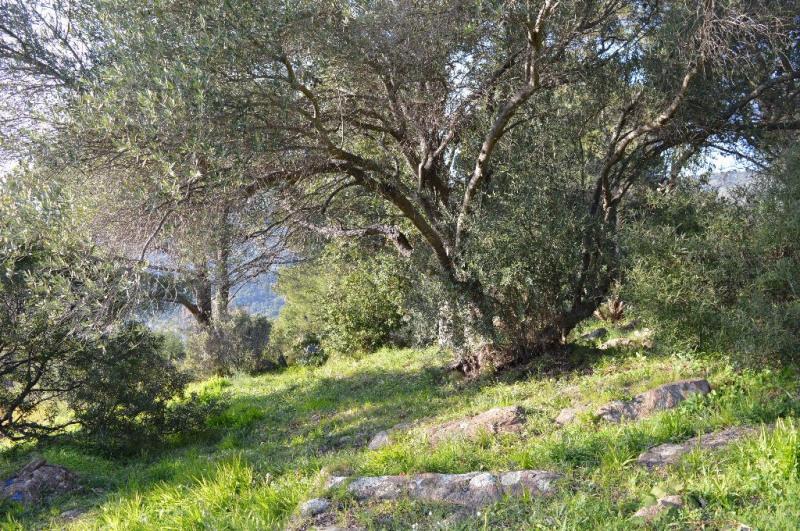 Vente terrain Le lavandou 265000€ - Photo 3