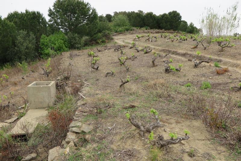 Venta  terreno Collioure 50000€ - Fotografía 3