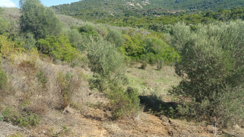 Vente terrain Pietrosella 136 250€ - Photo 9