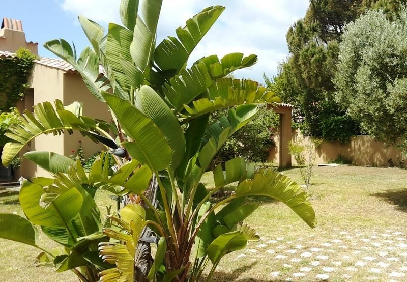 Vacation rental house / villa Porticcio 5 500€ - Picture 17