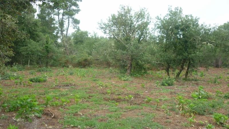Vente terrain Pissos 86000€ - Photo 2