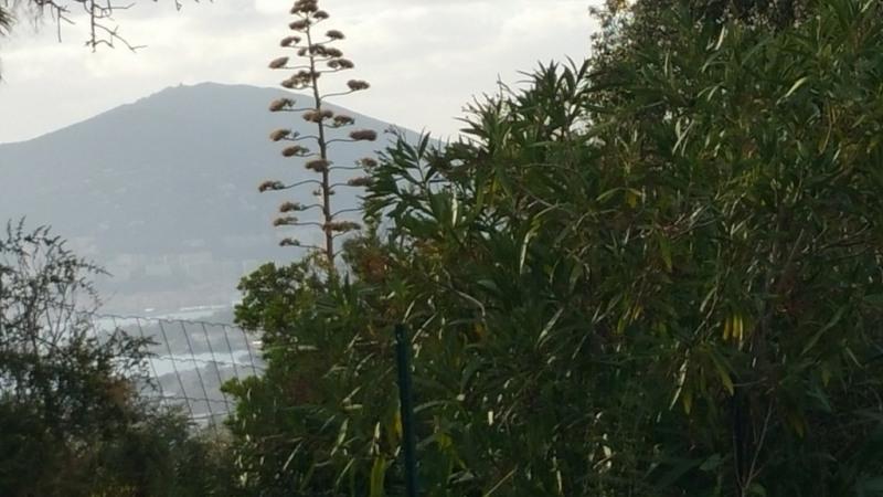 Vente terrain Bastelicaccia 170000€ - Photo 9