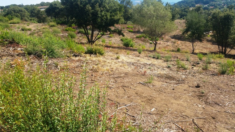 Vente terrain Eccica-suarella 180 000€ - Photo 4