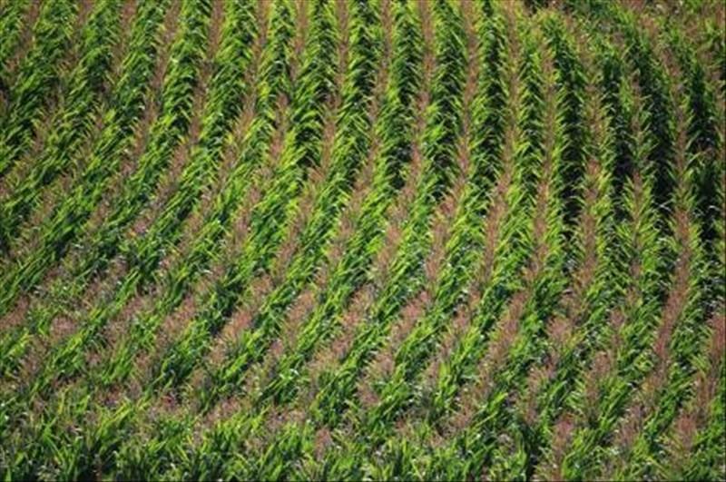 Vente terrain Berville la campagne 35000€ - Photo 1