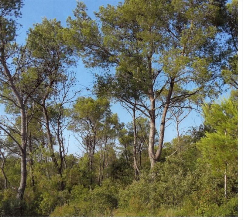 Vente terrain Aigues vives 26500€ - Photo 1