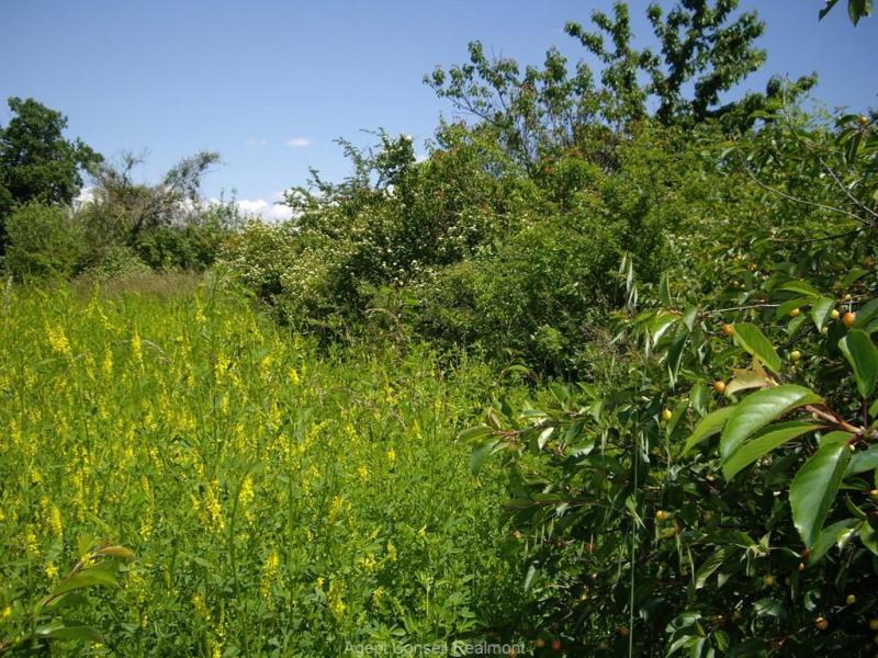 Vente terrain St antonin de lacalm 38000€ - Photo 3