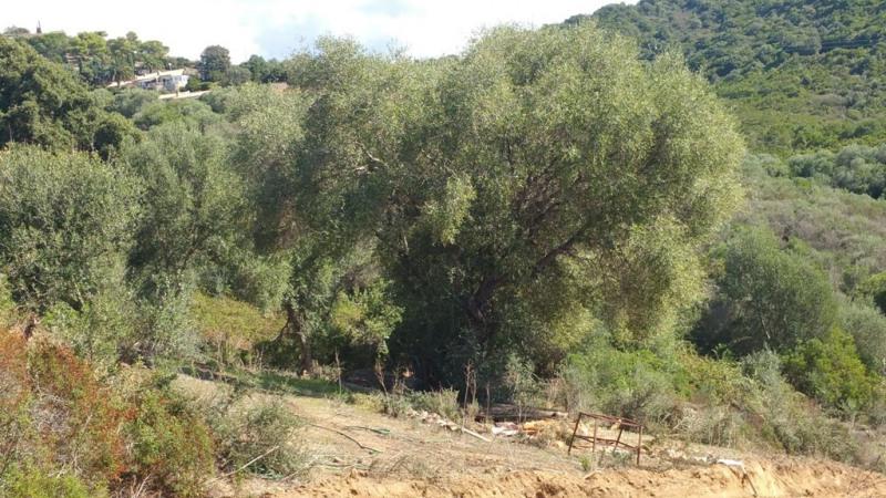 Vente terrain Pietrosella 136250€ - Photo 2