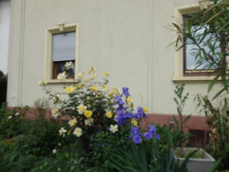 Alquiler  casa Bischheim 1260€ CC - Fotografía 3