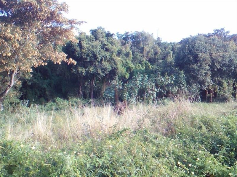 Vente terrain Ravine des cabris 92400€ - Photo 2