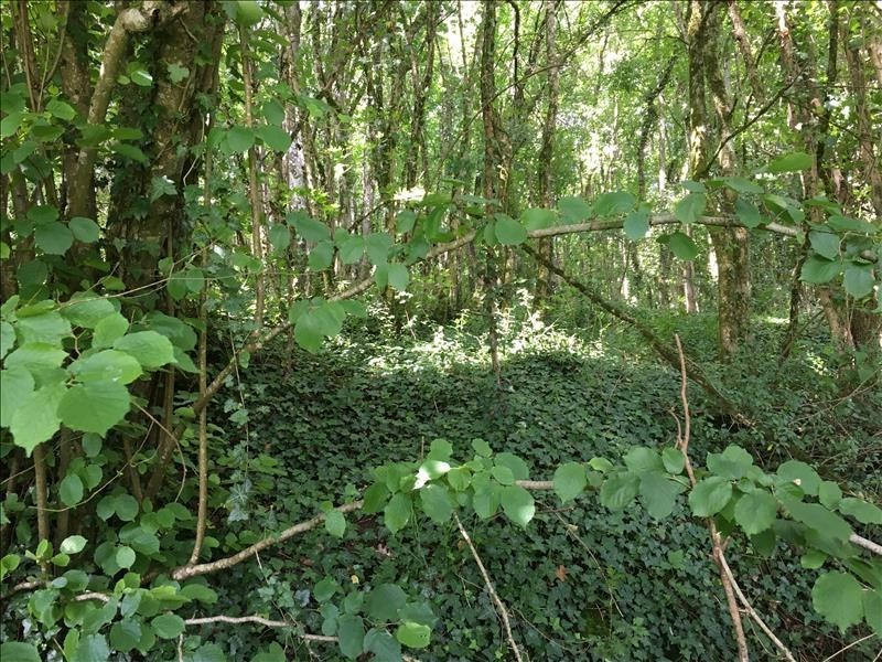 Vente terrain Iteuil 29000€ - Photo 3