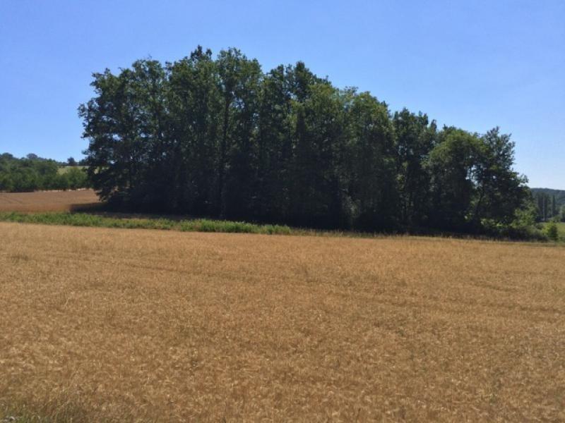 Vente terrain Saint-germain-de-belvès 68300€ - Photo 6